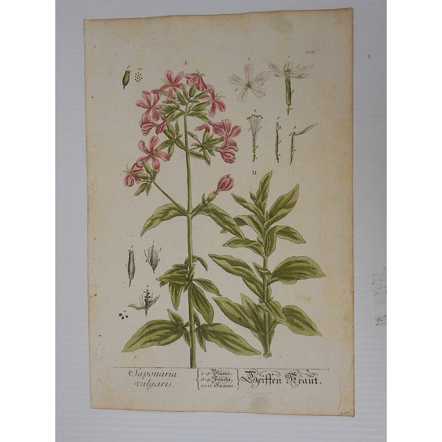 18th C. Botanical Engravings Folio Size- Set of 2 - Image 3 of 5