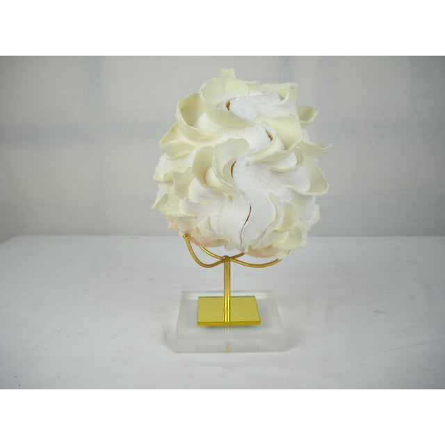 Image of Ruffled Clam Shell On Lucite Base
