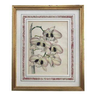 19th Century Botanical Lithograph of Orchids