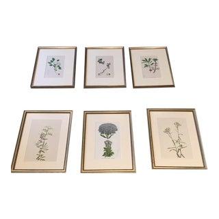 Framed Vintage Botany Lithographs - Set of 6
