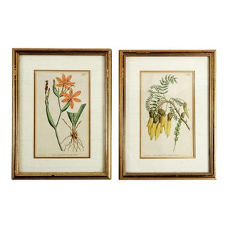 1791 Botanical Engravings- A Pair