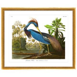 Soicher Marin Louisiana Heron Gold Framed Audubon Print