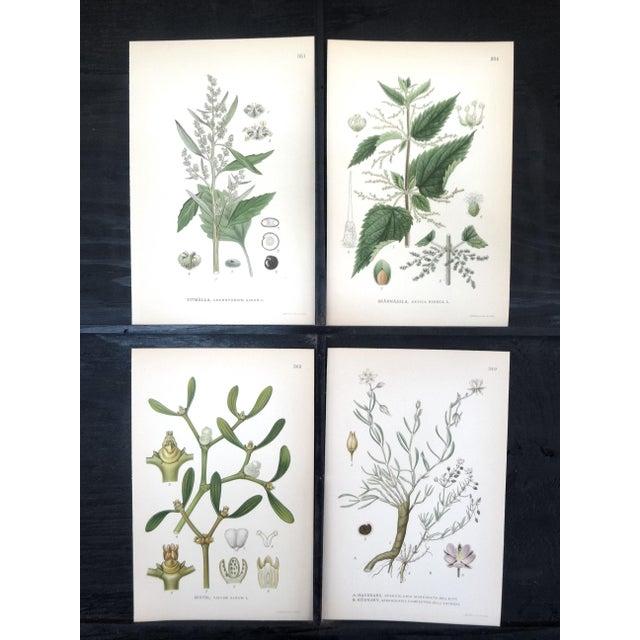 Image of 1922 Vintage Swedish Floral Prints - Set of 4