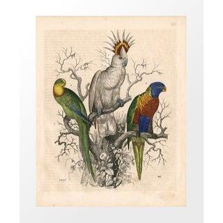 Vintage 3 Parrots Archival Print