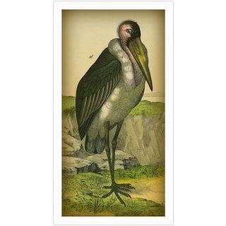 Vintage 'Pelican' Archival Print