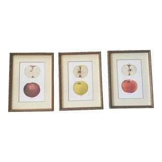 Framed Gold Vintage Apple Prints - Set of 3