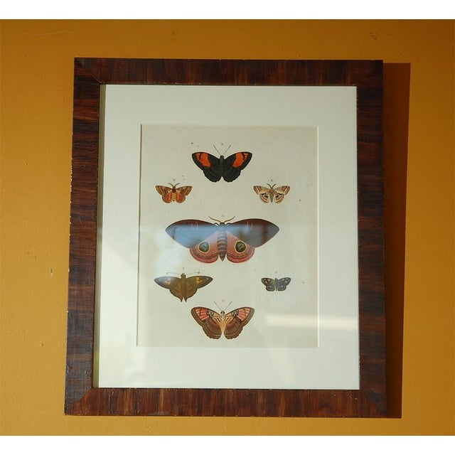 Antique Butterfly Prints Set of Eight - Image 9 of 10