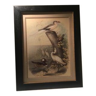 Vintage Botanical Bird Print