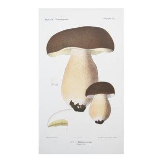 1910 French Vintage Botanical Mushroom Print