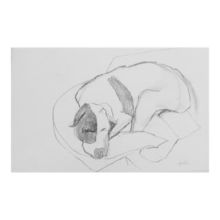 """Terrier Dog Asleep"" Drawing by Martha Holden"