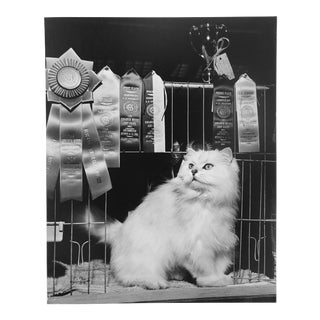 Vintage Photograph of a Prize Winning Show Cat by R. McNitt