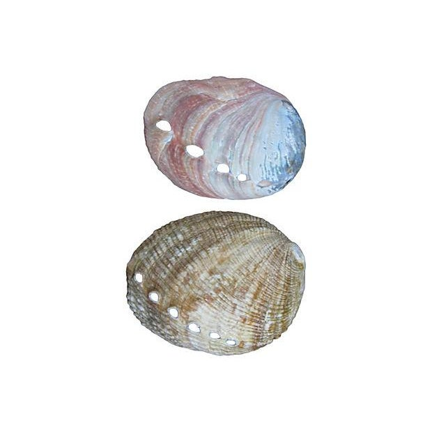 Image of Vintage Mother-Of-Pearl Abalone Shells - Set of 6