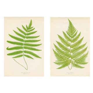 1872 Fern Prints - Pair