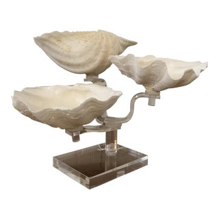 Shells on Lucite Base Stand