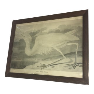 Audubon Great White Heron #37 Old Print
