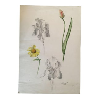 Antique Botanical Drawing or Study of Flowers in Pencil and Watercolor