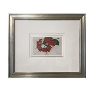 New Henredon Rhododendron Framed Print