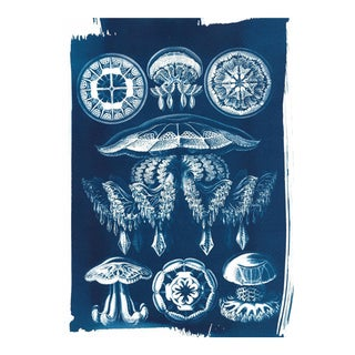 Jellyfish Anatomical Drawing by Ernst Haeckel, Cyanotype Print, A4 Size (Limited Edition)