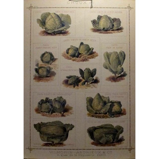 1900 Original French Vintage Vegetable Chart - Image 2 of 6
