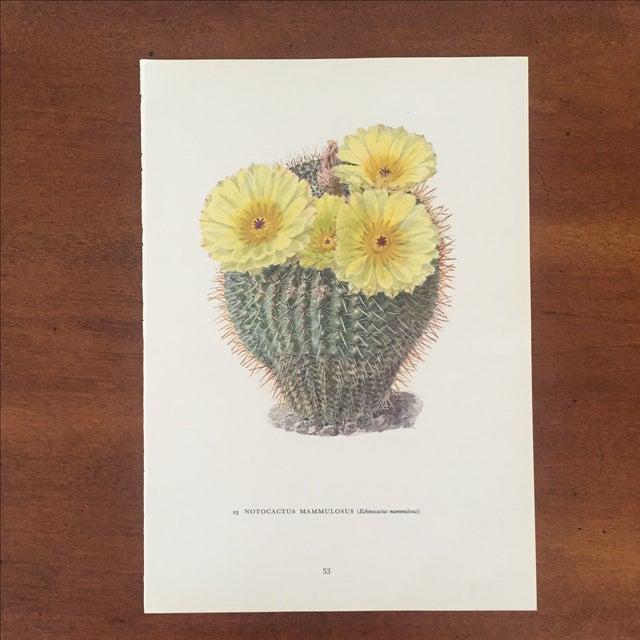 Vintage Succulent Cactus Print - Image 2 of 4