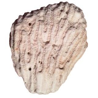 Natural Coral Specimen