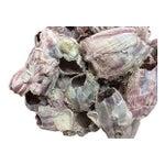 Image of White & Pink Barnacle Cluster Specimen