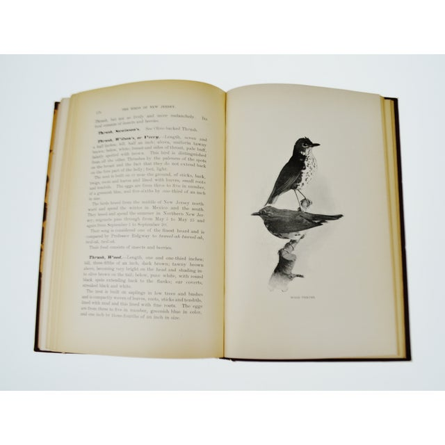 1896 The Birds of New Jersey Book - Image 10 of 11
