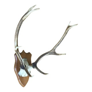 Pair of Deer Antlers Mounted on a Wooden Trophy Shield
