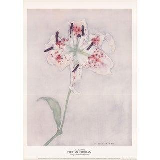 "Piet Mondrian ""Lily"" 1996 Poster"