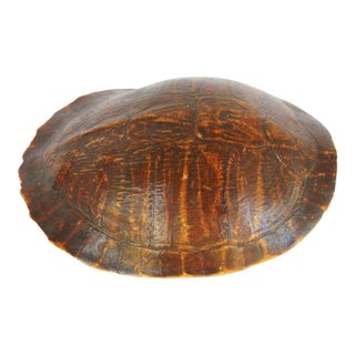 Vintage Preserved Turtle Shell