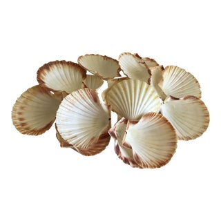 Natural Sea Shells - Set of 15