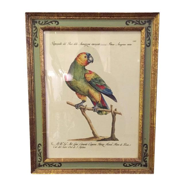 Bird Print Art - Set of 4 - Image 1 of 5