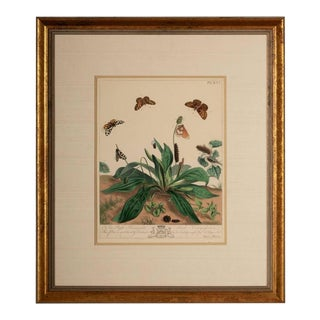"Moses Harris ""Natural History of English Moths and Butterflies"" Print"