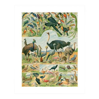 Antique 'Ostrich & Friends' Archival Print