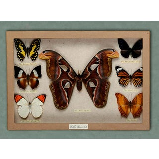 Sarreid LTD. Insect Box With Butterflies