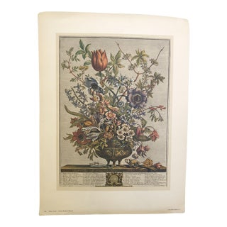 Botanical Art Prints by Robert Furber - Set of 4