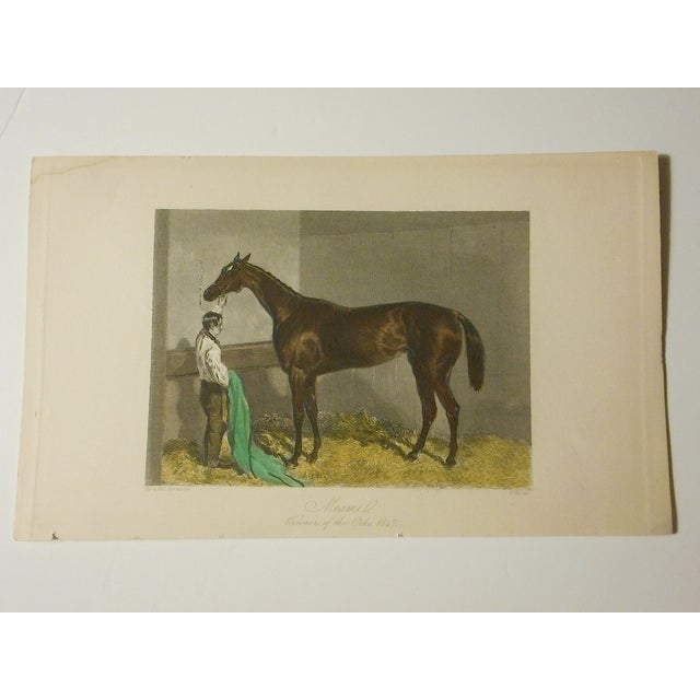 Antique Horse/Equine Engraving, Hand Colored - Image 3 of 3