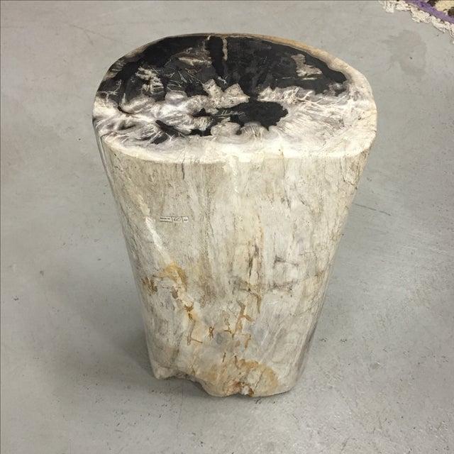 how to make petrified wood at home