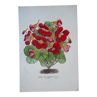 Antique Botanical Lithograph-19th Century-Folio Size