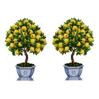 Lemon Tree Topiary - A Pair