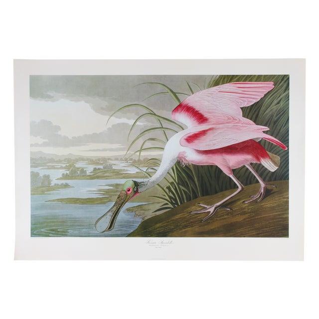 Image of j.j. Audubon Roseate Spoonbill Print