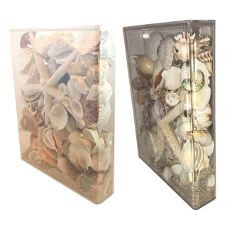 Seashell Collection Lucite Cases - A Pair