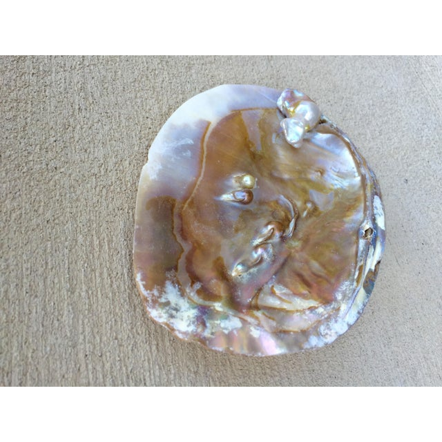 Natural Shell Tray With Baroque Pearl - Image 10 of 11