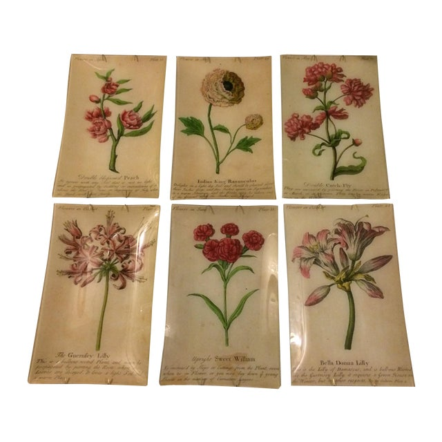 John Derian Wildflower Plates - Set of 12 - Image 1 of 11