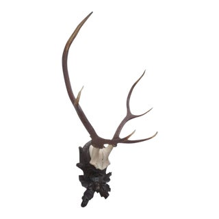 Stately Black Forest Antler Mount on Carved Walnut Plaque
