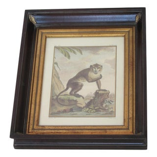 Framed Hand Colored Monkey Engraving