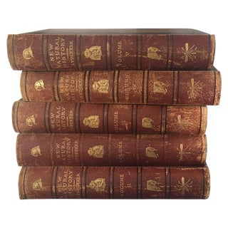 "Antique ""New Natural History"" Books - Set of 5"