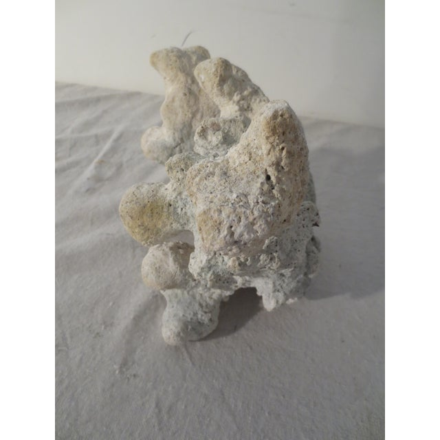 Image of Large White Coral Fragment