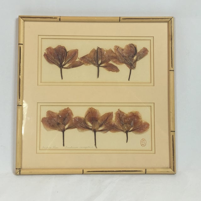 Image of Pressed Ginkgo Leaves in Bamboo Frame