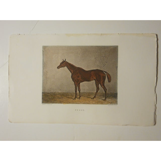 Image of Antique Horse/Equine Engraving, Hand Colored